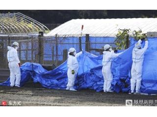 日本关市出现猪瘟疫情