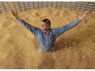 中粮、中储粮两次采购1000万吨美国大豆