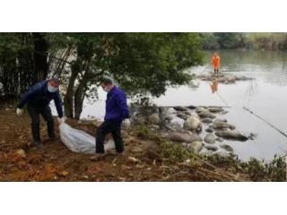 广西柳州河面漂浮近50头恶臭死猪 来源尚未查清