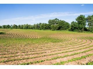 <b>2019年黑龙江省大豆生产者补贴每亩将高于玉米生产者补贴200元以上</b>