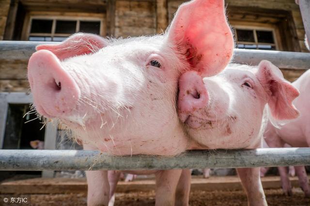 <b>农业农村部专家王祖力:生猪生产恢复呈好迹象</b>