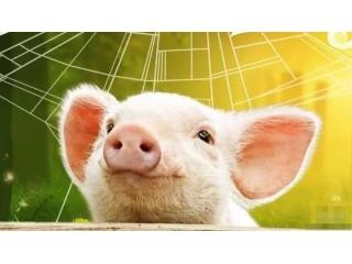 <b>未来已来,猪却不知道!</b>