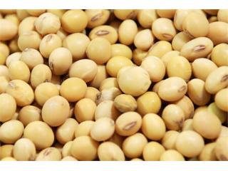 <b>经济日报:国产大豆当自强 2022年达到1.5亿亩!</b>