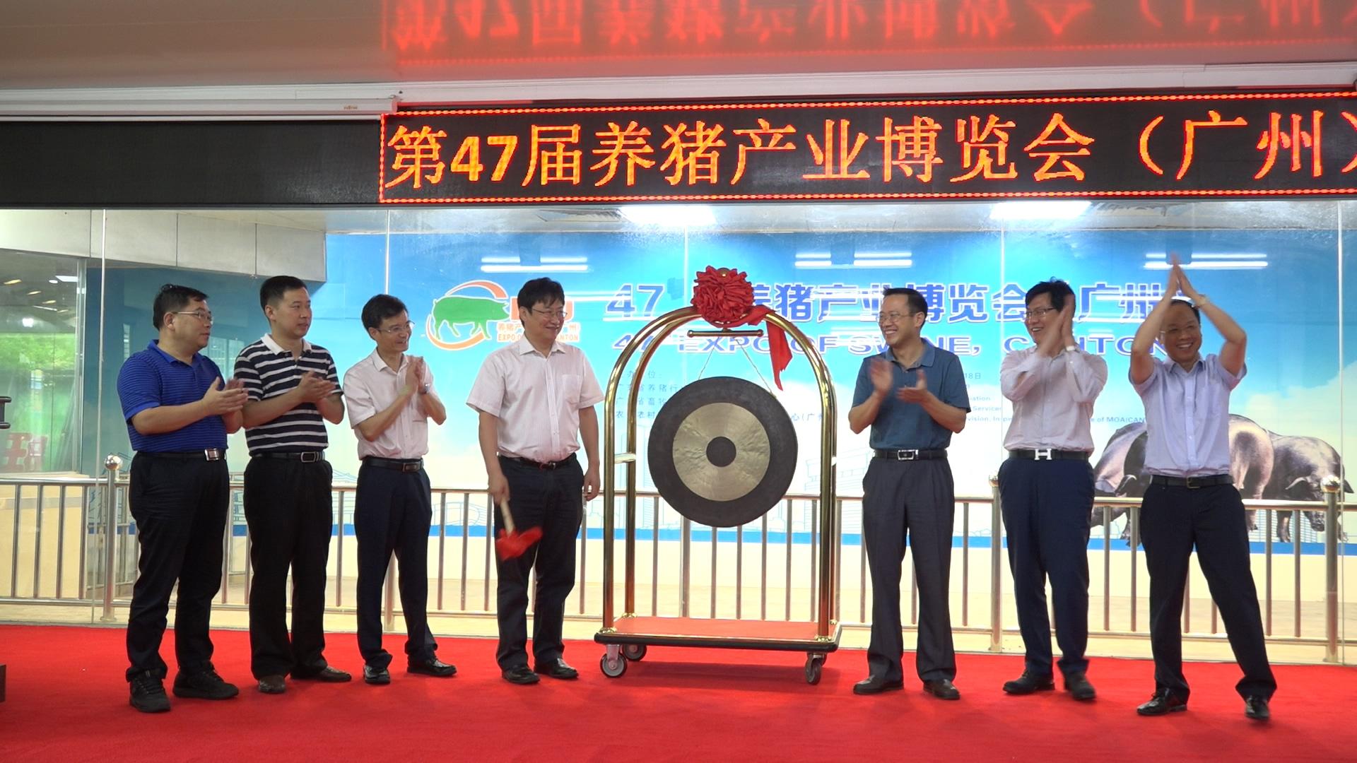 第47届养猪产业博览会(广州)图集之种猪拍卖