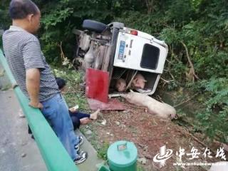 6座面包车塞进19头生猪 高速爆胎翻车2人受伤