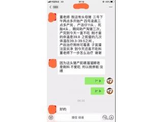 董广林|母猪产后出现不食、甚至是炎性感染的原因与治疗方案