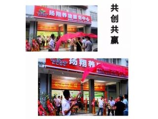 铁桶猪场|广西贵港第一家扬翔养猪赋能服务中心正式成立
