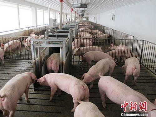好消息!猪场复养、检测诊断、清洁消毒三大技术标准规范发布(含规范附件)