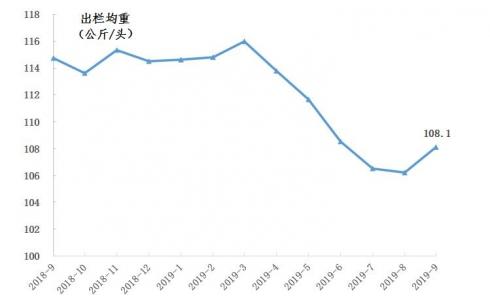 种猪补栏环比增加271%,生猪出栏价格同比上涨101% |9月广东生猪产销形势分析