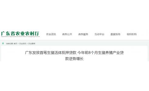 <b>广东发放首笔生猪活体抵押贷款 400头活体生猪抵押获500万元贷款</b>