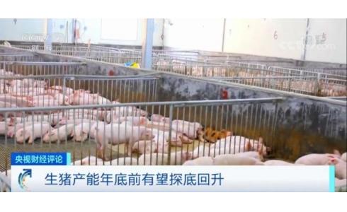 生猪产能有望探底回升!肉价啥时稳?