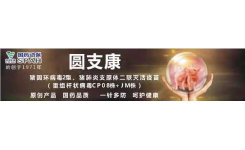 【国药动保特约-今日猪价】2020年1月13日:猪价窄幅震荡