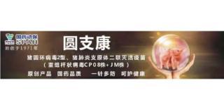 【国药动保特约-今日猪价】2020年2月10日:猪价持续上涨