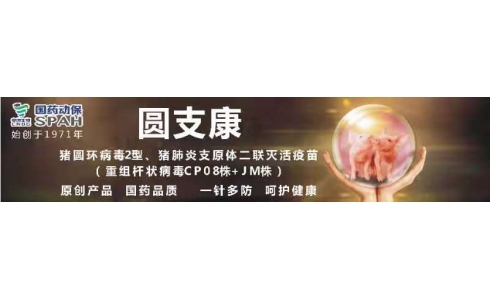 【国药动保特约-今日猪价】2020年2月17日:猪价持续上涨,局地小幅调整