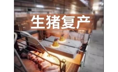 官方:8月份全国生猪生产继续较快恢复,生猪存栏同比增31.3%