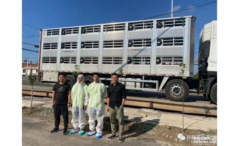 谷越科技首批种猪引进顺利完成!