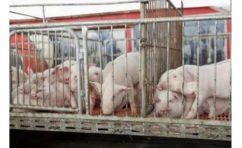 中国划分5个大区防控动物疫病,生猪养殖流通格局将调整