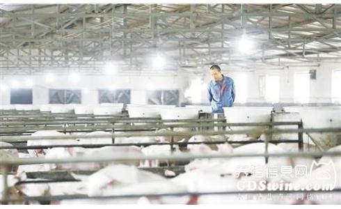 """养猪业务不赚钱?新希望公司确定""""有价值的出栏""""路线!"""