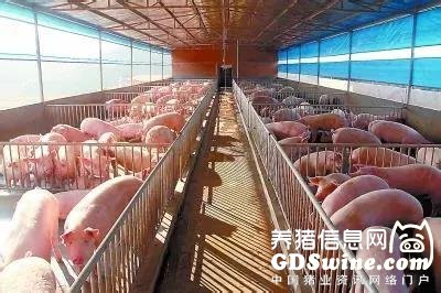 农业农村部:稳产保供的目标是将全国猪肉年产量稳定在5500万吨