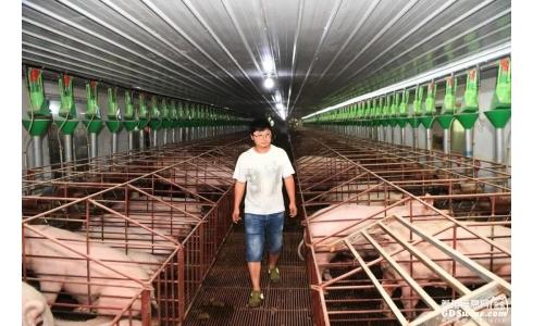 猪场被划入禁养区就得无偿拆除,这合理吗?个别地方出现以环保为借口关停猪场的苗头,这种倾向是很危险的