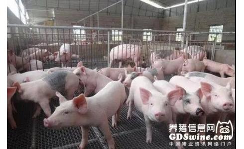 生猪行情仍将低迷。建议养殖户加快淘汰低产母猪,不要盲目压栏赌行情