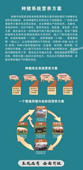种猪系统营养方案产品介绍.jpg