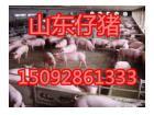 15092861333今日三元仔猪批发价格